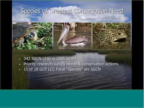 GCP LCC Lunch Webinar Series Louisiana Wildlife Action Plan - August 5, 2015