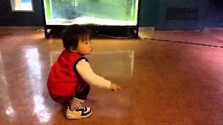 大淀川学習館でアカメを見ながらはしゃぐじんじんです♪ 2012年2月撮影。...