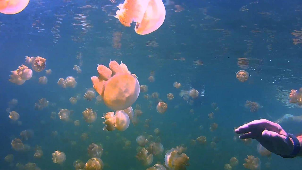 Jellyfish Lake Rock Islands Palau GoPro HD2