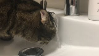 Cat Gets Water Poured on Head While Drinking from Sink