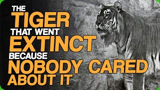 The Tiger That Went Extinct Because Nobody Cared About It (The Fact Fiend Fact Checking Process)