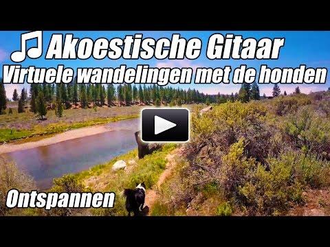Akoestische Gitaar Instrumentale Virtuele Walking Tour Hond Wandelingen Rivier Loopband Video Wandel