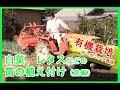 【激うま!完全有機栽培】白菜、レタス、キャベツなどの苗の植え付け(前編)
