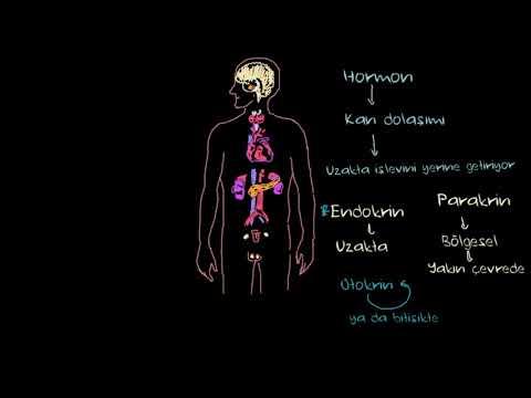 Endokrin Sistem Hakkında Temel Bilgiler