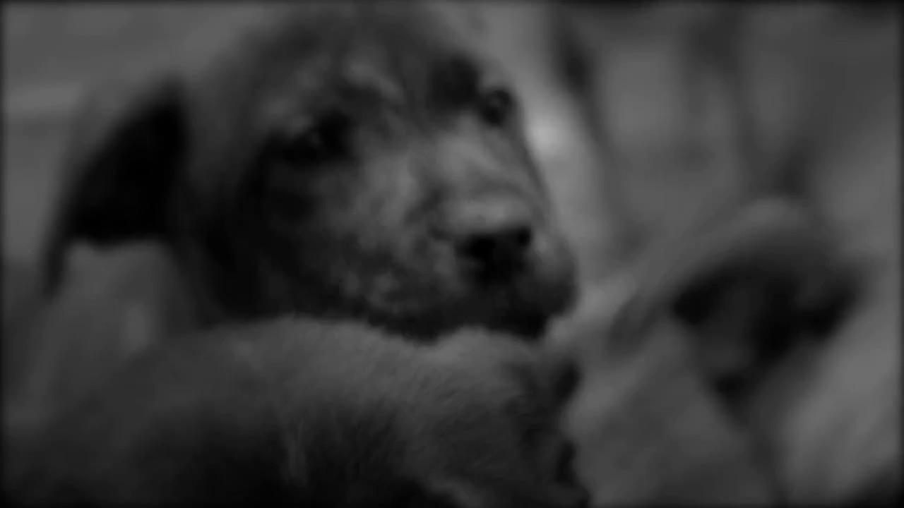 Fixing the Pet Problem: Monday at 10pm on KSL