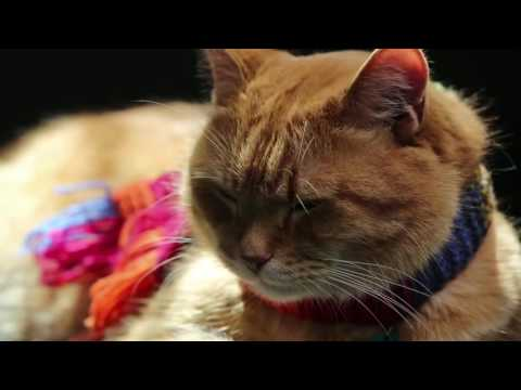 Закадровый перевод интервью Уличный кот по кличке Боб/ Фильм Уличный кот по имени Боб /Фильм