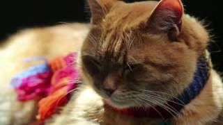 """Закадровый перевод интервью """"Уличный кот по кличке Боб""""/ Фильм Уличный кот по имени Боб /Фильм"""