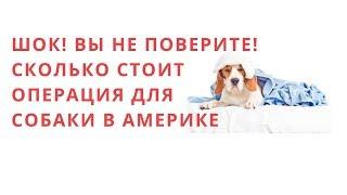 ШОК! ВЫ НЕ ПОВЕРИТЕ !Сколько стоит операция для собаки в Америке.