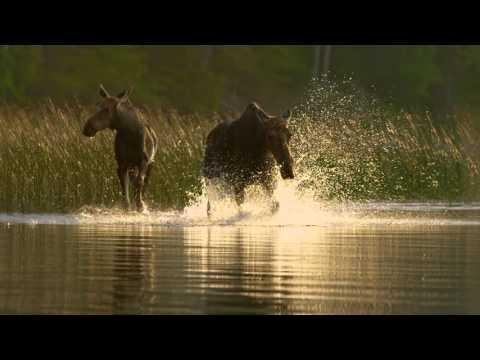 Tourism Saskatchewan Prince Albert National Park