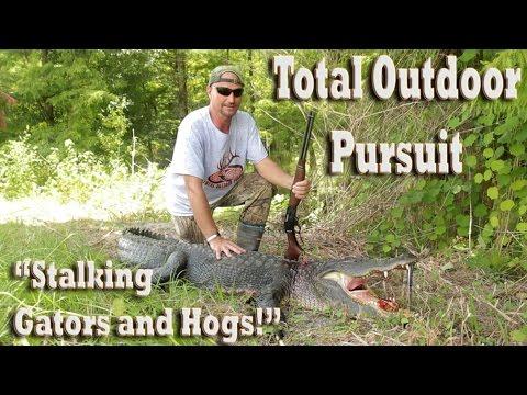 Alligator & Hog Hunting In Florida Everglades Swamps!