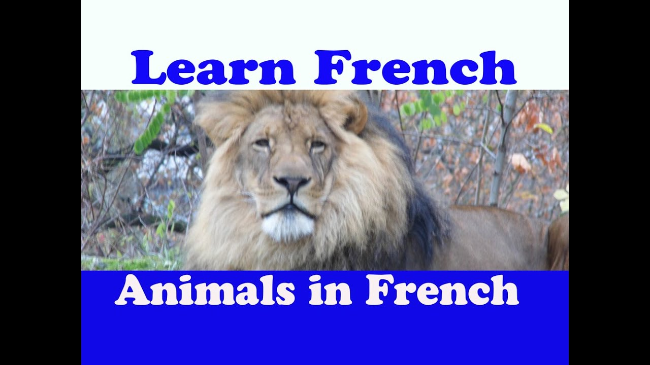 zoo in french language