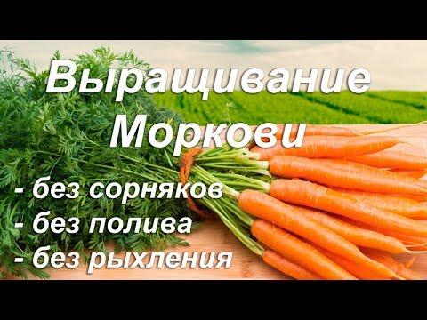 Легкое выращивание МОРКОВИ! БЕЗ СОРНЯКОВ! ПОЛИВА и РЫХЛЕНИЯ!