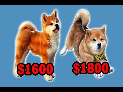 Top 10 Most Expensive Dog Breeds in The World 2017