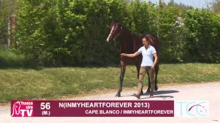 Arqana - Breeze - Up - Lot 56 - M By Cape Blanco / Inmyheartforever
