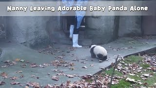 Nanny Leaving Adorable Baby Panda Alone | iPanda