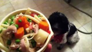 Chicken Stew For Dogs