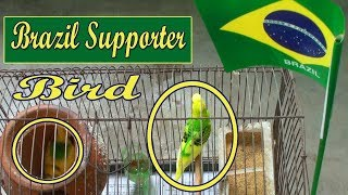 Brazil Supporter Bird - Fifa World Cup 2018 - Simple Crafts