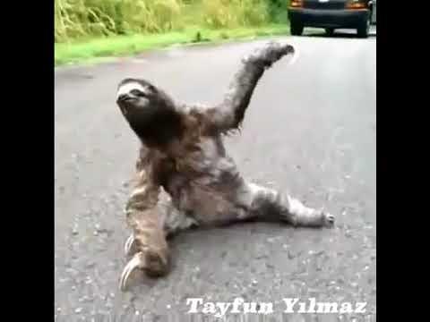 Tayfun Yılmaz Maymun Vineları