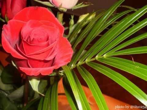 rodjendanske ruze i cestitke Rođendanske ruže   YouTube rodjendanske ruze i cestitke