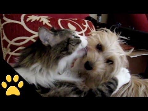 Valentines Day Animals: Compilation