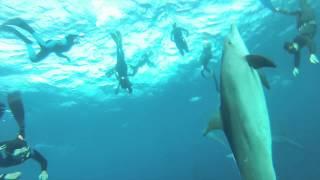 Dauphins tursiops et apnée delphinienne Hurghada