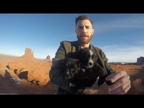 puppy rescue - then vs now