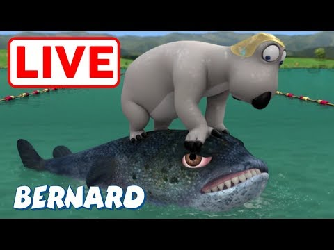 [LIVE] Bernard Bear | Triathlon AND MORE | Cartoons For Children