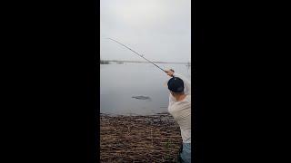Рыбалка удалась shorts