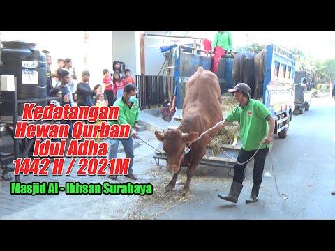 Kedatangan Hewan Qurban Idul Adha 1442H / 2021M
