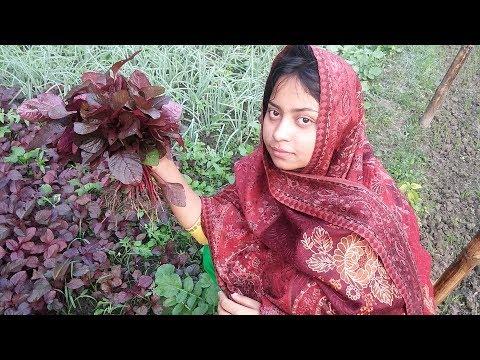 Village food recipe - Lal shak fry - Easy Vegetable Recipe