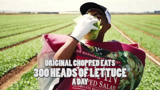 Taylor Farms Original Chopped Salad Pre-Mascot Race Video 2016
