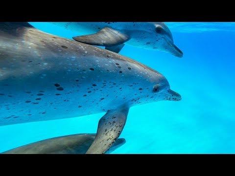 Dolphin Tales 12018  Dream of  Swimming with Dolphins