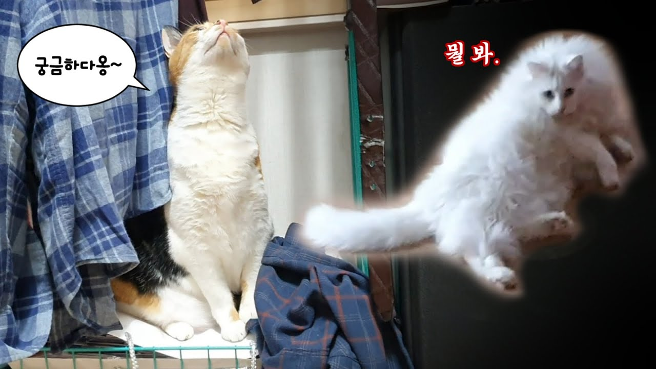 병철이는 놀라고, 점프는 점프하는 하루 (What are you Doing?)