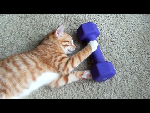 A Kitten's Guide to Exercise