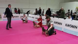Int. dog show Nitra (SK) 2018, Border terrier BOB