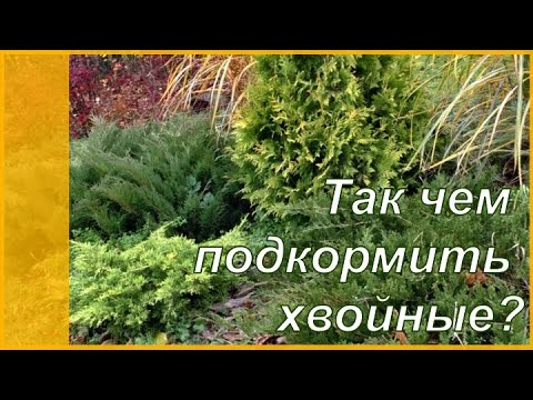 Как и чем подкормить хвойные растения? Удобрения для хвойных.