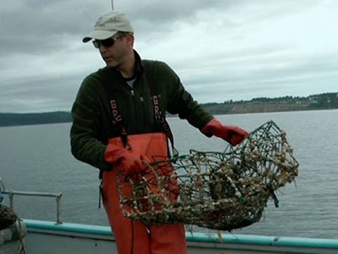 In Washington Waters, Diving for Lost Crab Pots