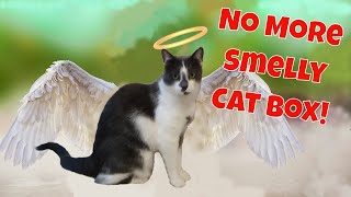 How to eliminate cat box odor  5 tips to fix that smelly cat box