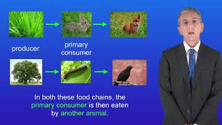 GCSE Science Biology (9-1) Food Chains and Predator-Prey Cycles