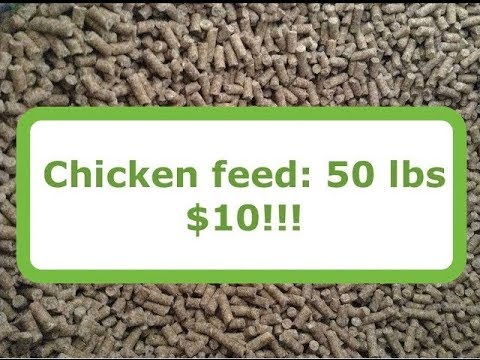 Chicken Feed Packbait SUPER CHEAP AND EFFECTIVE!!