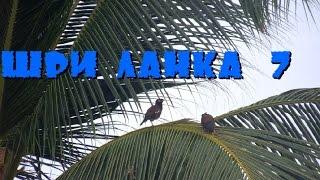 Шри-Ланка 7: Ворона на балконе