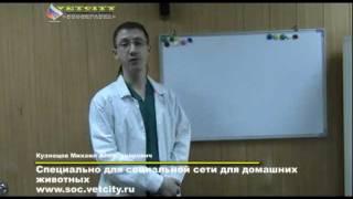 Ветеринария - Кормление кошек и собак натуральной пищей