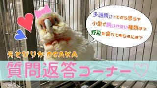 【えとぴりかOSAKA】質問返答コーナー【テンジクバタンと一緒に】