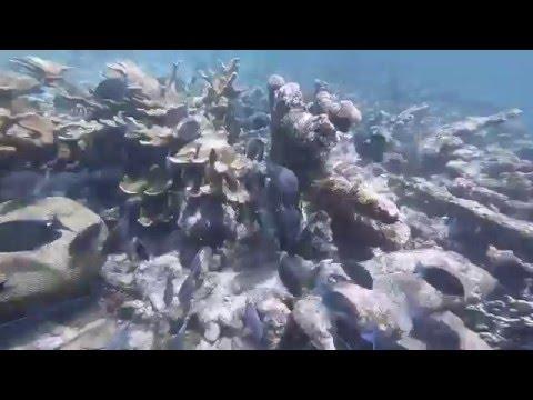 Belize 2016 (Belize Marine TREC)
