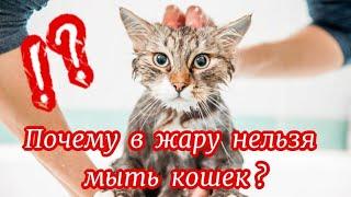 Почему  в  жару  нельзя  мыть  кошек?  Why can't you wash cats in hot weather?
