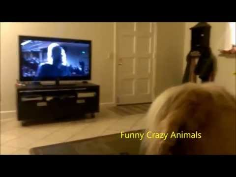 The World's Most Funny Dog 2014- Funny Dog Singing Opera While Watching House Of Cards- Hilarious