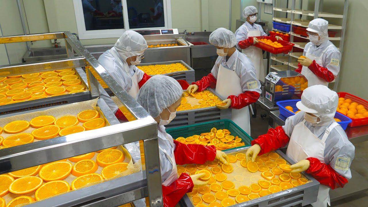 힐링됩니다!  오렌지와 마쉬멜로우 대량으로 건조하기(직접 개발한 3억짜리 기계) / Orange and Marshmallow Dry Food Factory