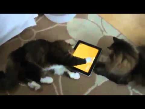 Юмор видео смотреть бесплатно, humor слушать онлайн