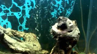 Mopani Wood Aquarium Driftwood