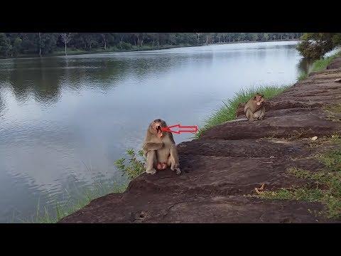 OMG, What make king monkey do like this? monkey make funny